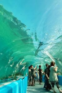 Aquarium08142007-01.jpg