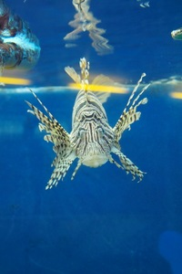 Aquarium08142007-02.jpg