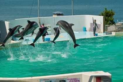 Aquarium08142007-03.jpg