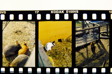 Development_PEN_FT_Kodak_E100vs_02192011-1.jpg