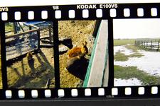 Development_PEN_FT_Kodak_E100vs_02192011-2.jpg
