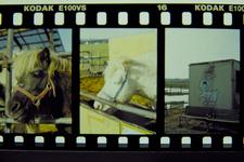 Development_PEN_FT_Kodak_E100vs_02192011-3.jpg