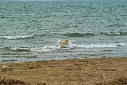 Dog07092007.jpg