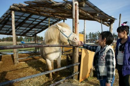 Horse02192011nex5.JPG