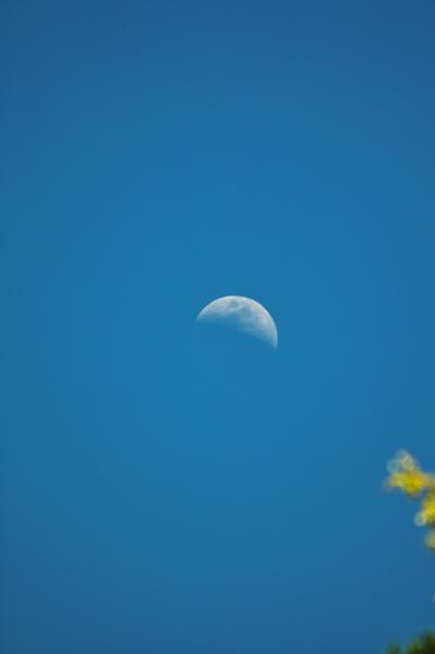 Moon05112008sd.jpg