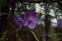 Orchid_Land01142008-201.jpg