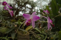 Orchid_Land01142008-204.jpg