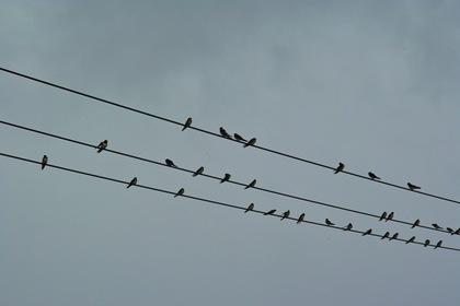 Swallows07092007.jpg