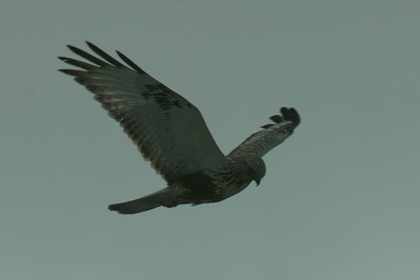 birds01132008-01.jpg