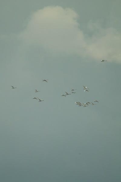 birds01132008-08.jpg