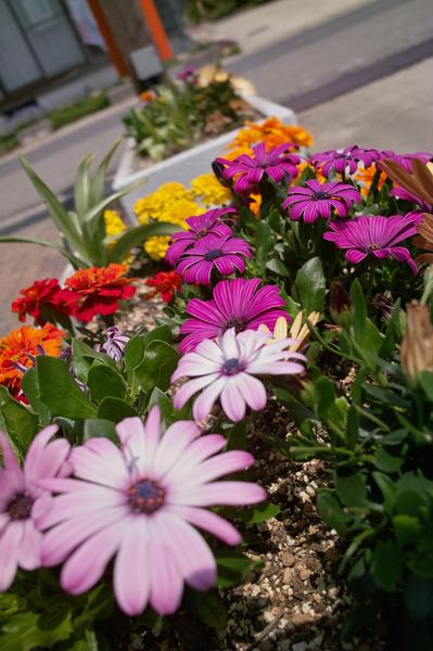 flower05232008d02.jpg