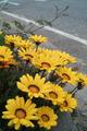flower05302009dp2-1.jpg