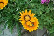 flower05302009dp2-2.jpg