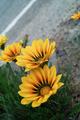 flower05302009dp2-3.jpg