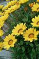 flower05302009dp2-6.jpg