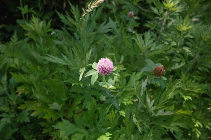 flower06102008-01d.jpg