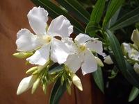 flower06182007-1.jpg