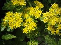 flower06182007-2.jpg