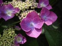 flower06182007-3.jpg