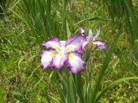 flower06182007-4.jpg