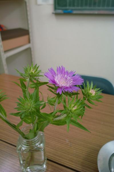 flower06232008d01.jpg