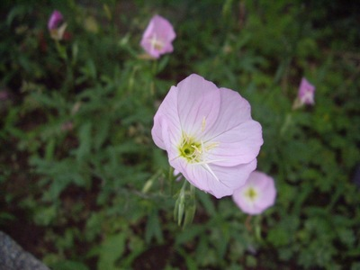 flower07012007.jpg
