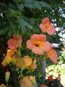 flower07272007-1.jpg