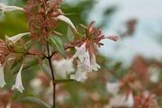 flower08052007-1.jpg