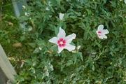 flower08052007-4.jpg