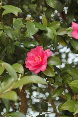 flower12232007-01.jpg
