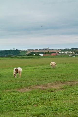 horses07222007.jpg