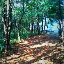 trees02092011ip-4.JPG