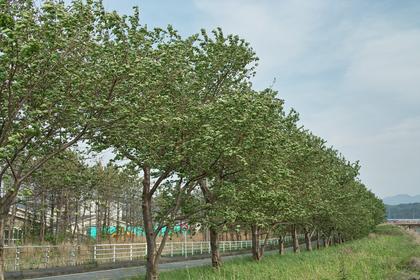 trees05102009dp2.jpg