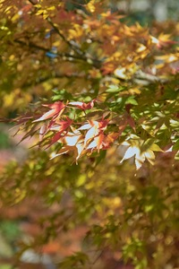 1Shinrin-park11172007-01.jpg