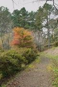 1Shinrin-park11172007-06.jpg