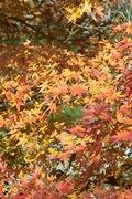 1Shinrin-park11172007-11.jpg