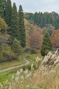 2Shinrin-park11172007-10.jpg