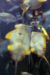 Aquarium08142007-11.jpg
