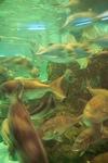 Aquarium08142007-13.jpg