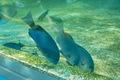 Aquarium08142007-16.jpg