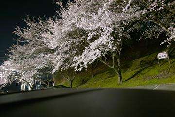 Cherryblossom04102009d02.jpg