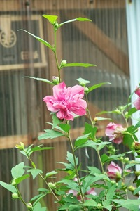 Flower07222007-2.jpg