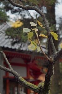 Kanazawa_shrine11242007-01.jpg