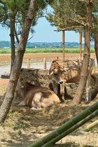 Kantakuchi08152007-07.jpg