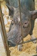 Kantakuchi11242007-02.jpg
