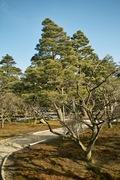 Kenroku-en02112008-11.jpg