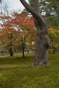 Kenrokuen11242007-09.jpg