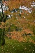 Kenrokuen11242007-11.jpg