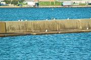 Marine_Park08052007-05.jpg