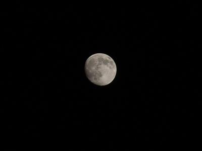Moon11112008.JPG